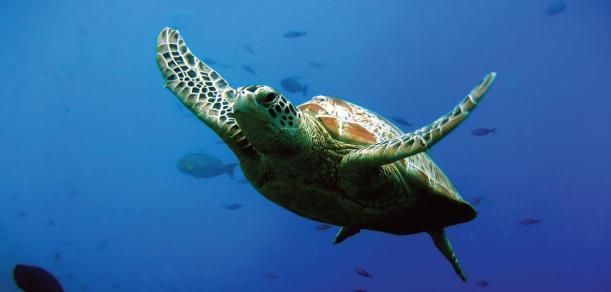 Kauai-Wildlife-4